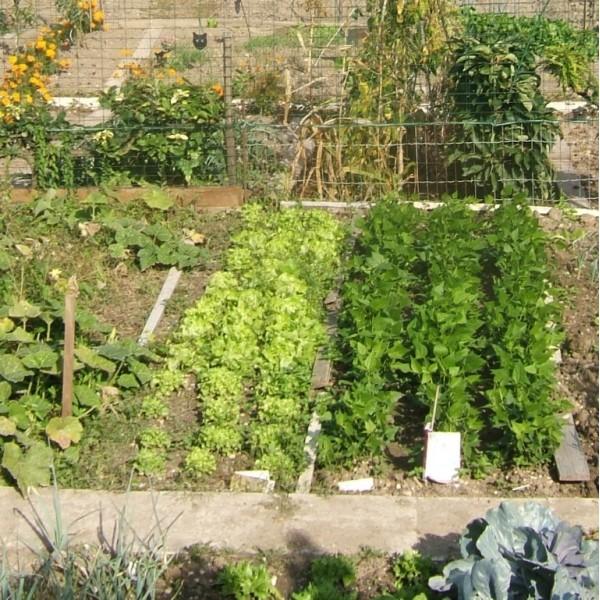 F te de la gastronomie portes ouvertes gourmandes aux jardins familiaux de cr teil tourisme for Jardin familiaux