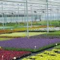 Centre de production horticole de Mandres-les-Roses