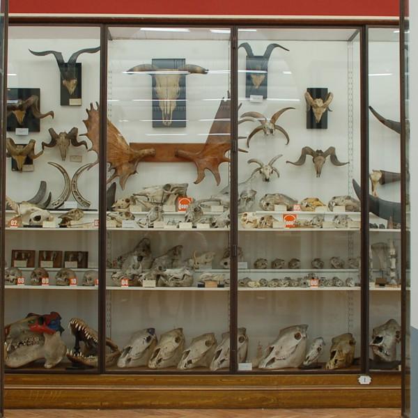 Le mus e fragonard cabinet de curiosit s tourisme val de marne - Le cabinet de curiosites ...