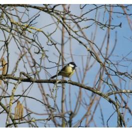 Balade nature : sortie ornithologique au bois de Vincennes