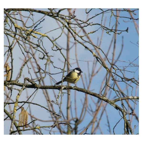 Balade nature dans le Bois de Vincennesà la découverte des oiseaux  # Bois De Vincennes Chien