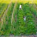 V'île Fertile, la ferme urbaine participative du bois de Vincennes