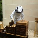 Visite des ruches d'un apiculteur artisan de Bry-sur-Marne