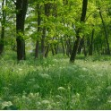 Balade forestière sur la Tégéval