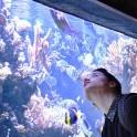 Les trésors de l'aquarium - Visite guidée