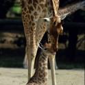 Parc zoologique de Paris - Visite libre